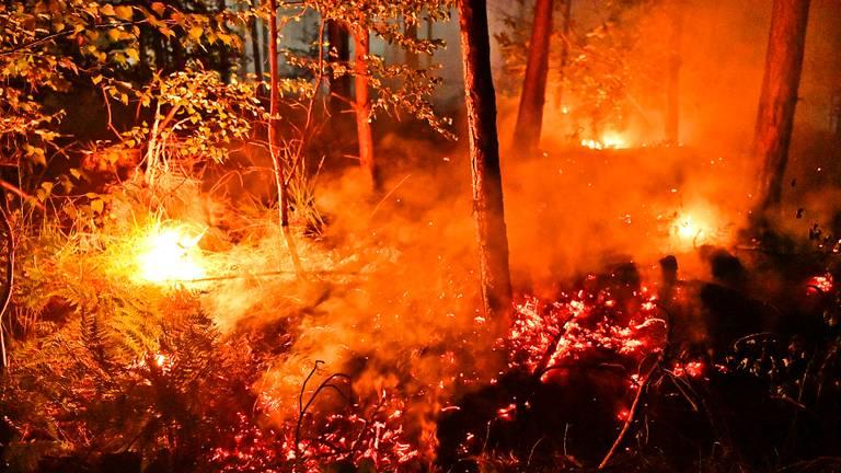 Het vuur in het bos in Valkenswaard werd rond drie uur 's nachts ontdekt (foto: Rico Vogels/SQ Vision).