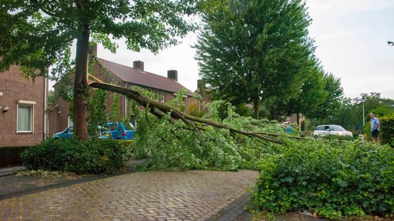 Boom door bliksem getroffen in Deurne (foto: Walter van Bussel/SQ Vision)