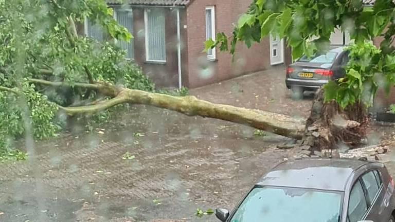 Aan de Berkelaar in Asten overleefde deze boom het noodweer niet.