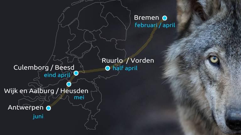 De route van de 'Heusdense' wolf.