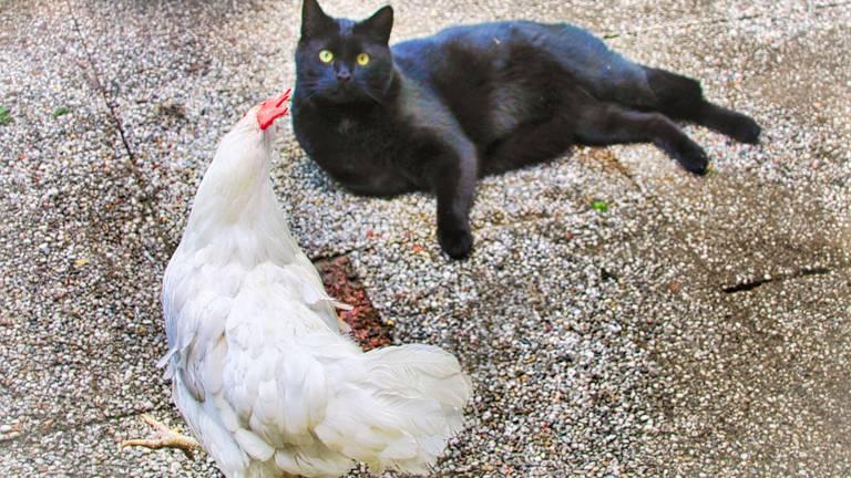 Kippie met de kat van wie ze altijd kopjes kreeg (foto: Ralph Kwappenberg)
