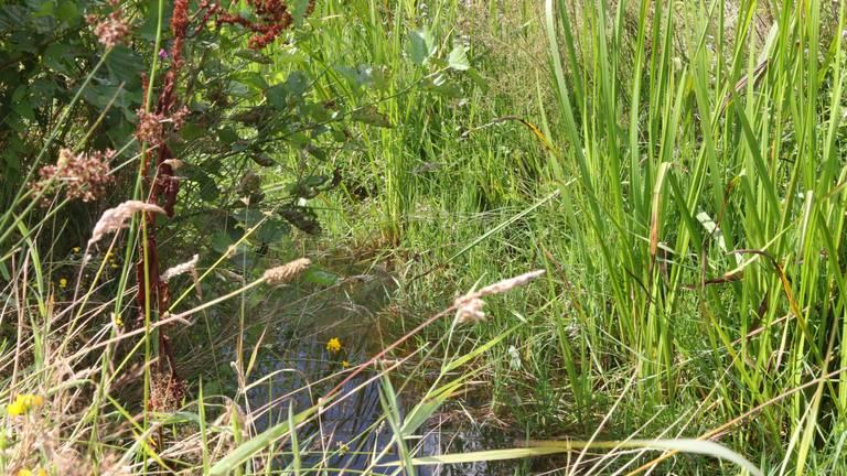 Een smalle, kronkelende beek houdt meer water vast.