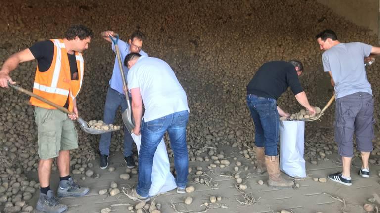 De piepers worden in zakken gedaan (foto: Ilse Schoenmakers).