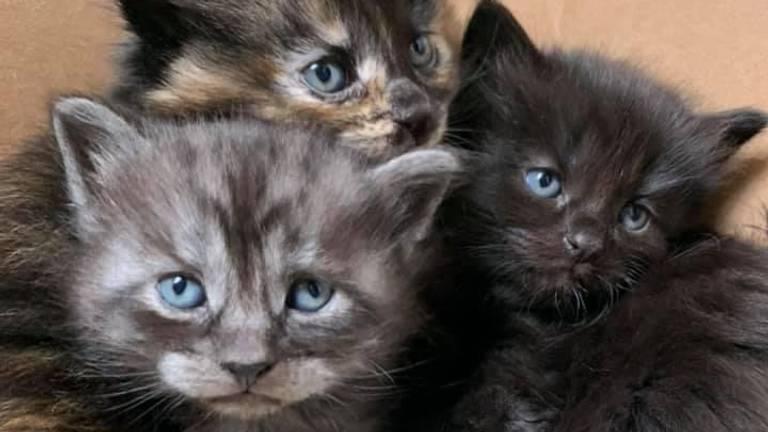 De katten van Corrie (Foto: Corrie Kant).