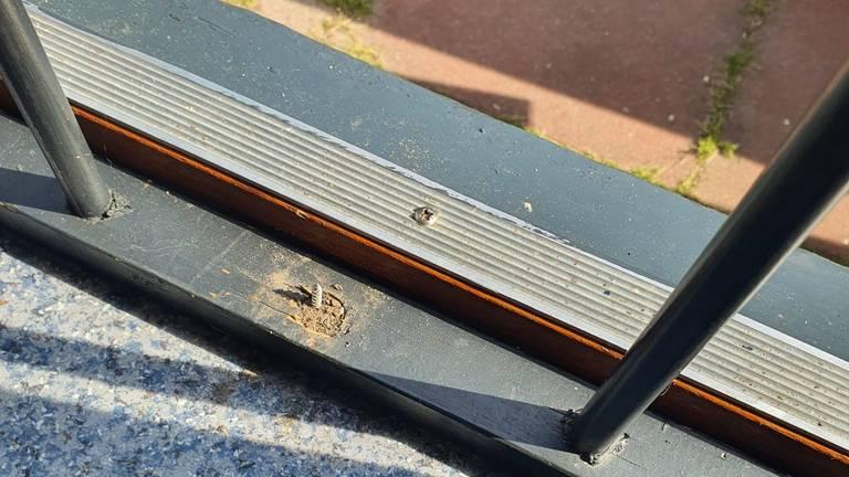 Een schroef steek uit de vloer (foto: Sabina en Peter Grob)