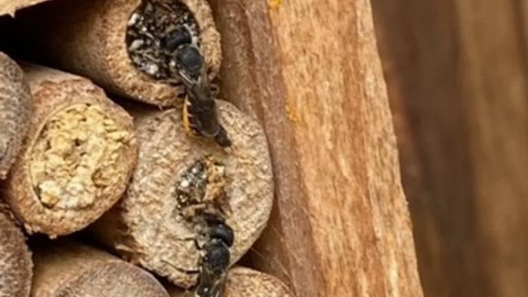 Insecten in een insectenhotel (foto: AC Markx).