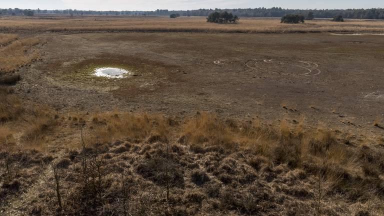 Droogte op Landschotse Heide met bijna verdwenen Witven (archieffoto 2020: Wim Hoogveld).