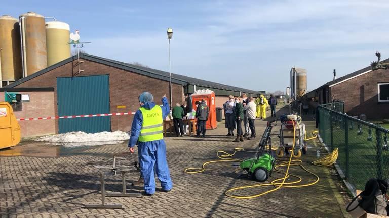 Vogelgriep vastgesteld bij pluimveebedrijf Sint-Oedenrode, drie bedrijven geruimd.