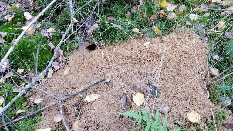 Het holletje van een bosmuis (foto: Marjon Jansen).