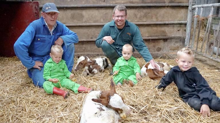 Gerrit Swinkels (links) met zoon Pieter en kleinzonen bij de drie pasgeboren kalfjes.