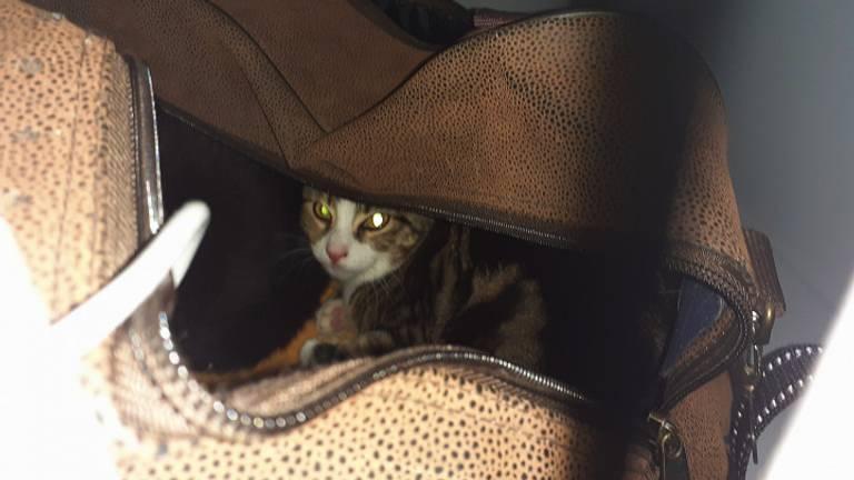 Vorige maand werd er ook al een tas met kittens gedumpt bij De Doornakker (foto: Dierenasiel De Doornakker)