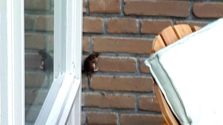 Een muis op de muur (foto: Adeline Besselink).