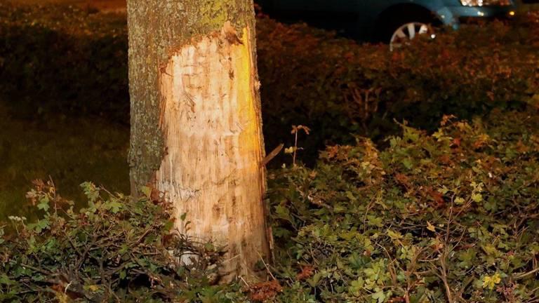 De bestuurder van de Audi raakte een boom langs de Gestelseweg in Den Bosch voordat de auto crashte 9foto: Bart Meesters).