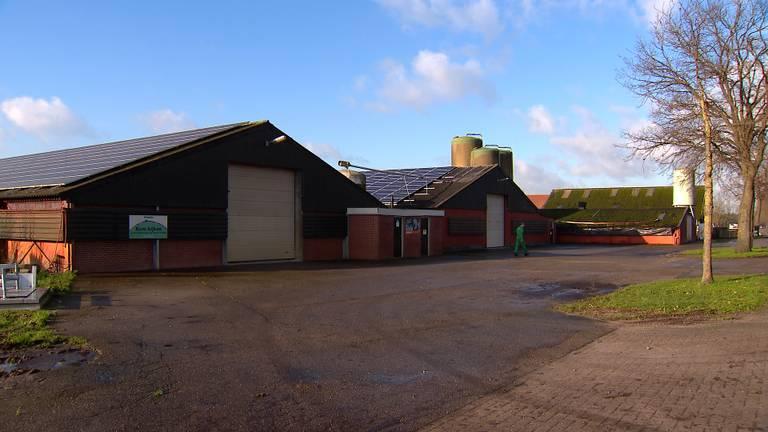 In totaal staan zes stallen leeg (foto: Omroep Brabant).