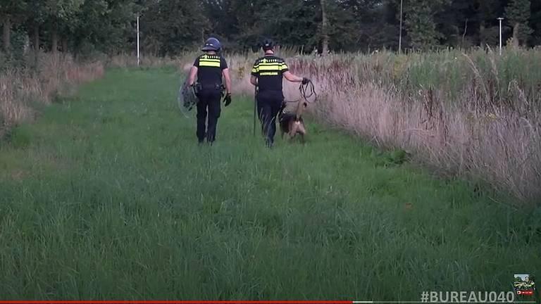 Op jacht met de politiehond in het maisveld (Beeld: Bureau 040)