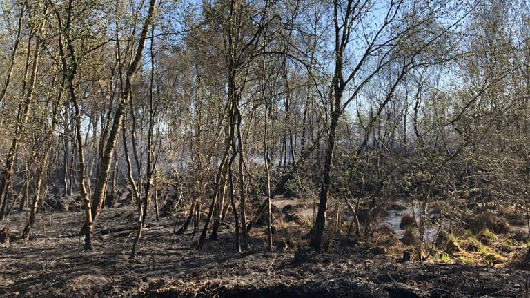 Een groot deel van de Deurnese Peel is door de brand verwoest (foto: René van Hoof).