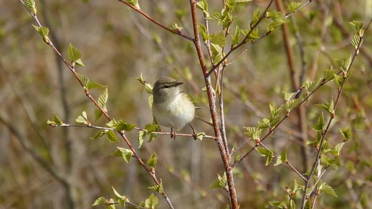 Een vogel geniet van het lentezonnetje (foto: Ben Saanen).