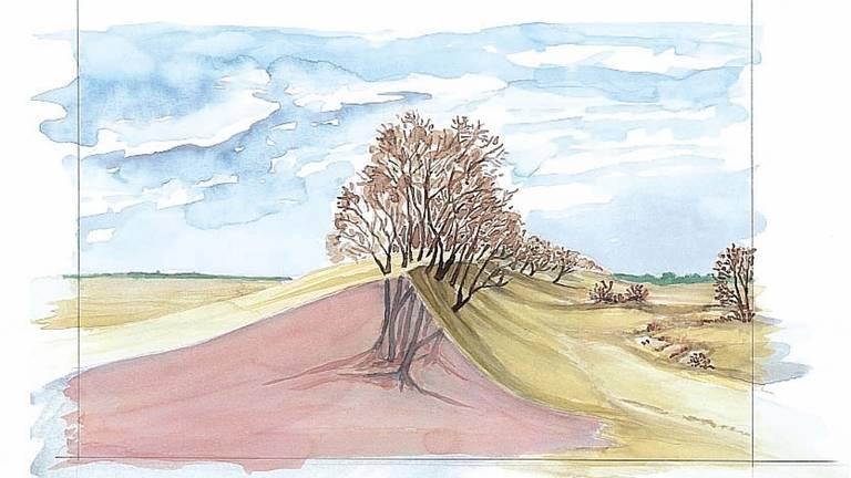 Een tekening van de windwerking op bomen in de Loonse en Drunense Duinen.