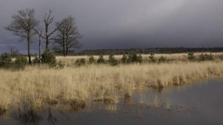 Het bedreigde natuurgebied De Kampina (foto: Natuurmonumenten).