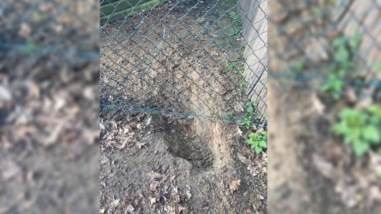 Fien vond een gegraven gat bij haar hek (foto: Fien Roefs).
