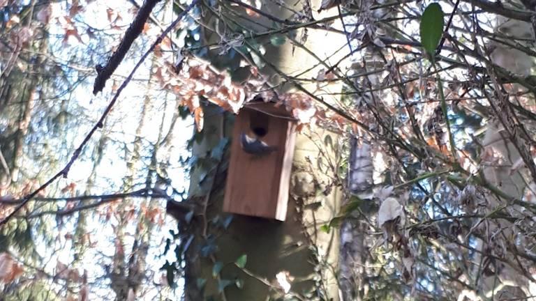 Een boomklever bij een vogelhuisje (foto: Sjannie de Laat).