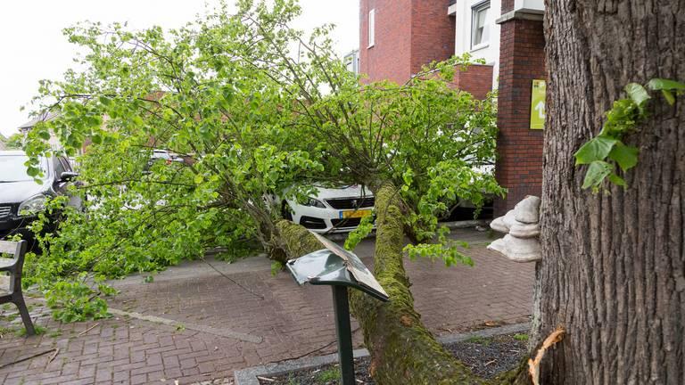 De tak bovenop de auto (foto: Albert Hendriks/Overloon Nieuws).
