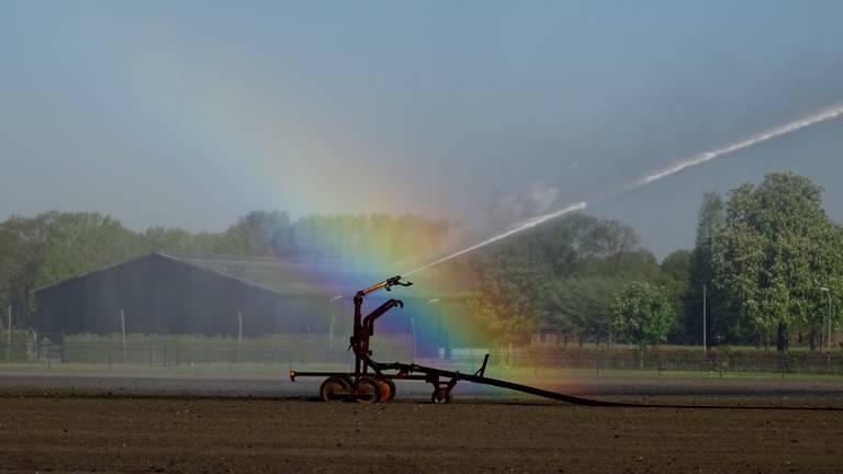 De Brabantse boeren hebben in de afgelopen droge jaren veel meer grondwater gebruikt dan werd verwacht. Foto: Willem van Nunen