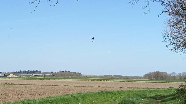 Rouwvliegen vliegen massaal uit (foto: Willy Heesakkers).