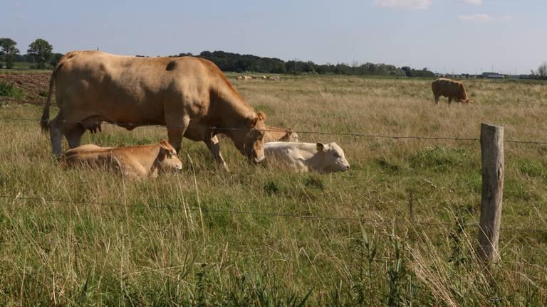 Niemand wil de boeren weg uit Brabant.