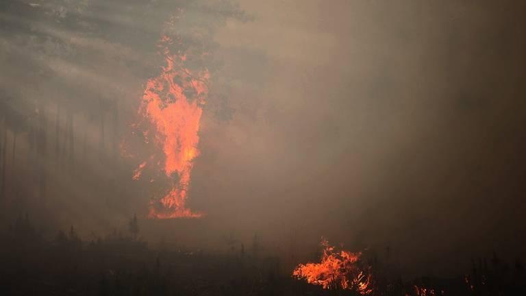 De bosbrand bij Chaam (foto Jeroen Stuve / Stuve Fotografie)