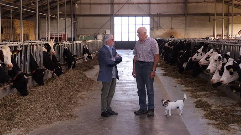 Louis van der Kallen bij Nol Hooijmaijers in zijn melkveebedrijf in de Overdiepse polder