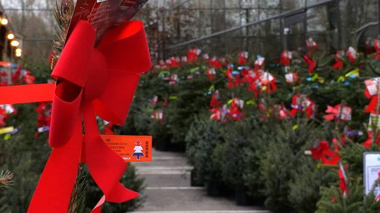 Tuincentra verzamelen een hoop kerstbomen