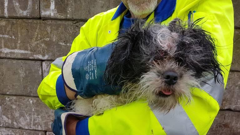 Het hondje maakte het goed, nadat het was gered. (Archieffoto)