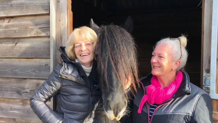 Paardencoaching door de GGzE op de Paardenhoeve in Eindhoven lijkt in twee jaar al een succes