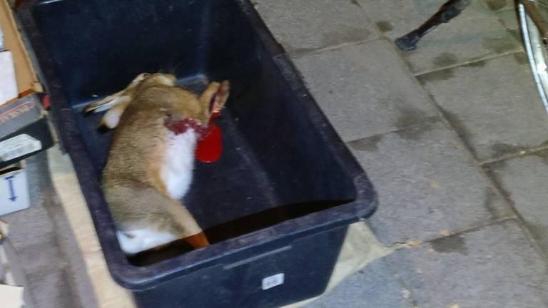 De stropers hadden net een haas geschoten. (Foto: politie.nl)