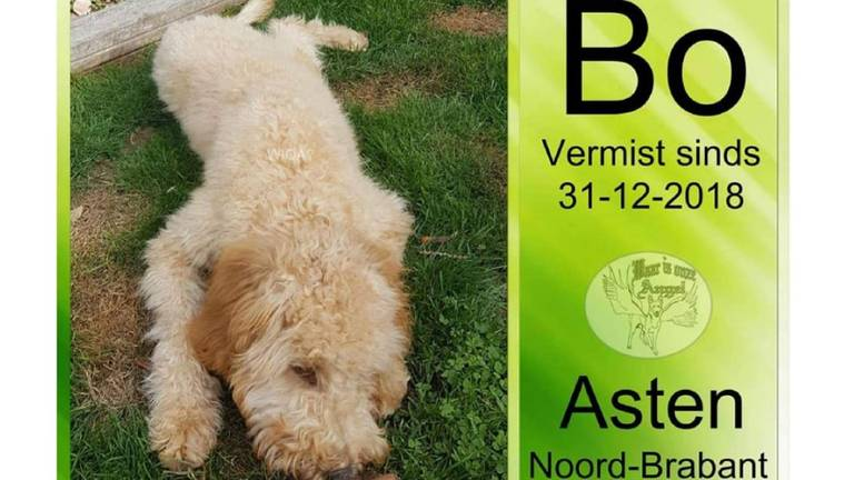 De vermiste hond Bo