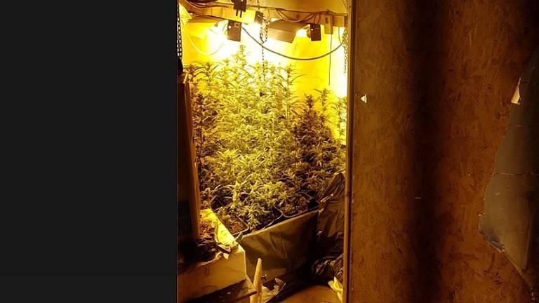 De hennepkwekerij werd gevonden op zolder. (Foto: politie Waalwijk/Facebook)