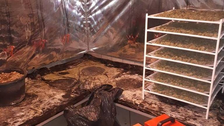 De politie vond gedroogde henneptoppen in het huis (foto: politie).