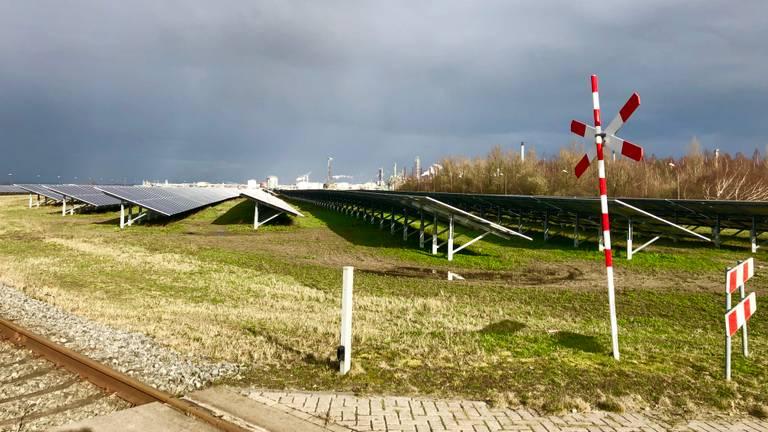 Het zonnepark met 76.000 panelen op het terrein van Shell Moerdijk. (foto: Raoul Cartens)