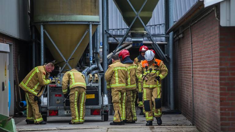 De brandweer probeert de varkens op het droge te krijgen. (Foto: Pim Verkoelen/SQ Vision)