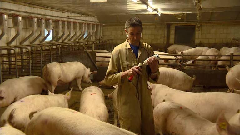 Boer Jan Vermeer in zijn stal. (Foto: Omroep Brabant)