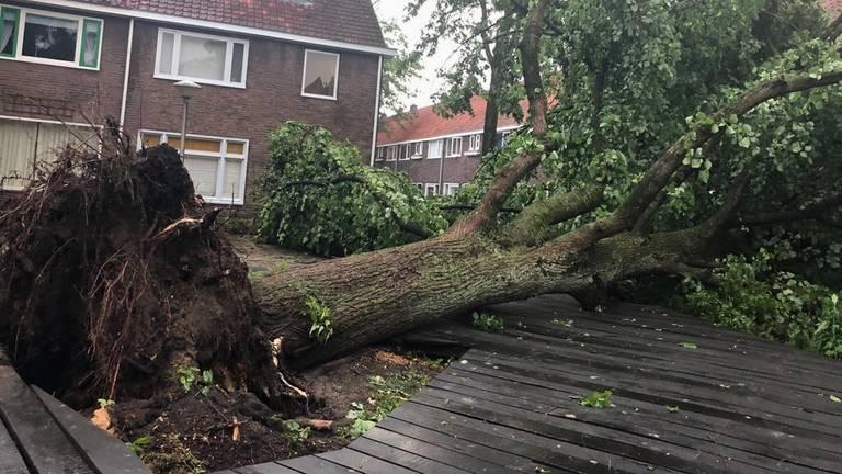 Omgevallen bevrijdingsboom in Eindhoven. (Archieffoto: Omroep Brabant)