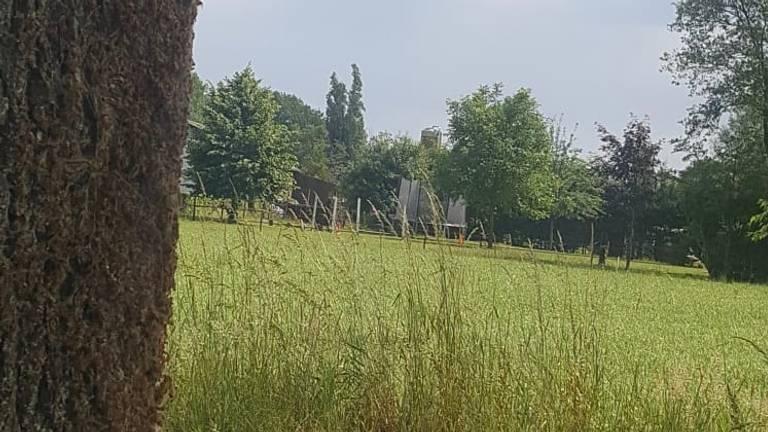 Eikenprocessierupsen in een boom vlakbij het huis van Jaap. (Foto: Jaap Noorlander)
