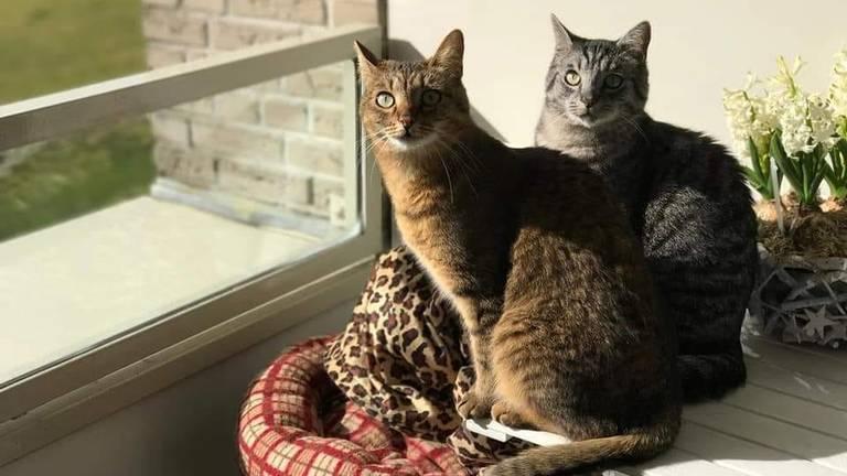 De katten van Deborah, Maya en Bailey.