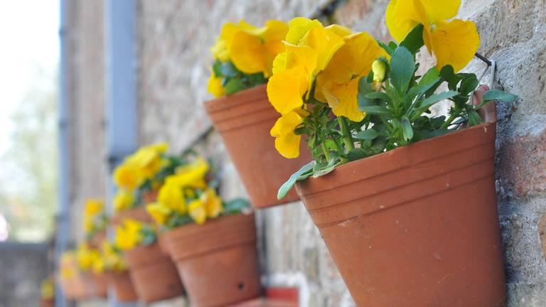 Niet de bloempotten uit het verhaal. (foto: Flickr/S. Davis).