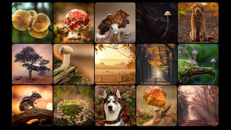 De top-15 mooiste herfstfoto's van Brabant.