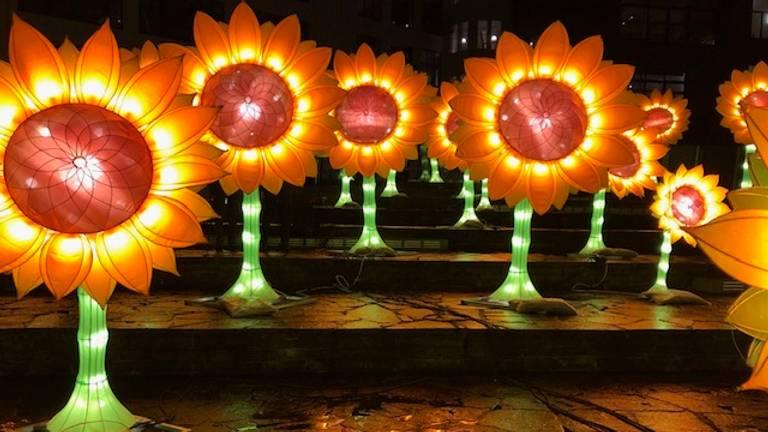 De zonnebloemen van Hugo Vrijdag op het Lichtplein in Eindhoven.