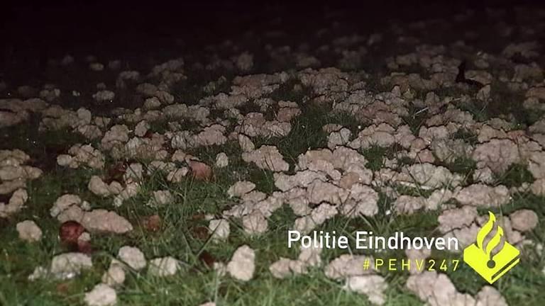 Ook onder de boom was de grond bezaaid met henneptoppen. (Foto: Facebook politie Eindhoven)