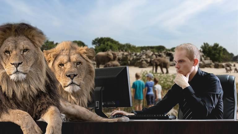 Werken in de dierentuin tijdens lerarenstaking.