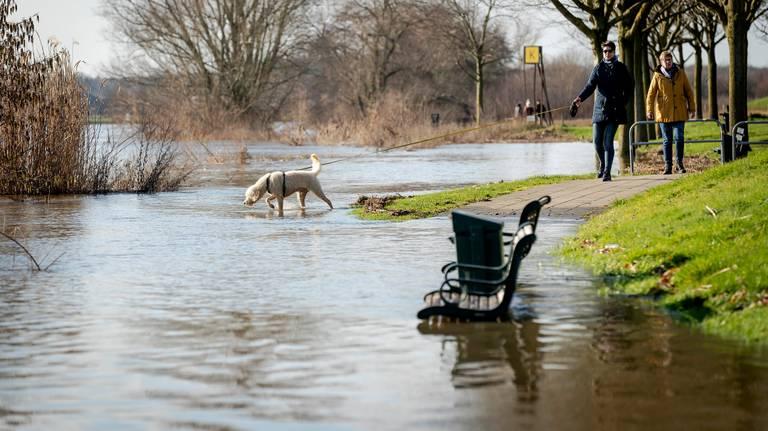 Door regenval is de waterstand in de Maas opgelopen. (Foto: ANP/Robin van Lonkhuijsen)